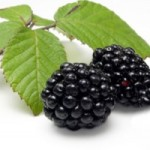 BlackberriesBranchFotoli
